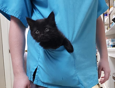 veterinary surgery